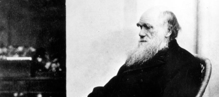 Անհավանական սխալ. Ո՞րն է Դարվինի սխալը էվոլյուցիայի հարցում