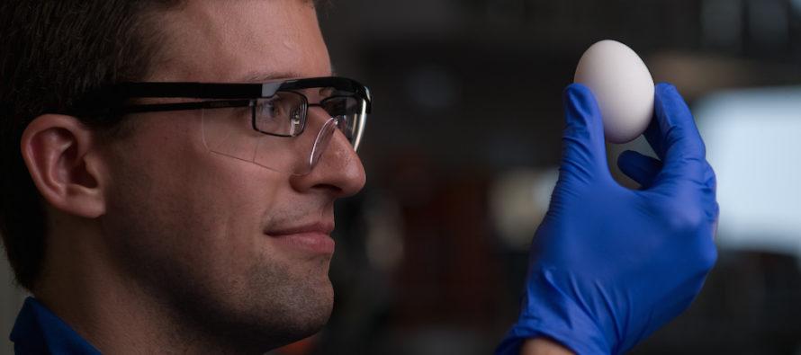 Գիտնականները ձուն «հակաեռացնելու» միջոց են գտել և ասում են, որ դա կարող է օգտակար լինել դեղորայքների ստեղծման հարցում