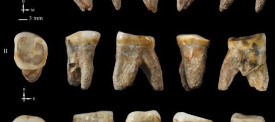 Բրածոները կարող են պատկանել  նախնադարյան մարդու նոր տեսակներին