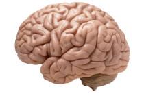 Գիտնականները կարող են վատ հիշողությունները վերածել լավի
