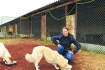 Փուրսելվիլի կենդանասերներն աշխատում են, որպեսզի Հայաստանի թափառական շների համար 16 հազար դոլար հավաքեն