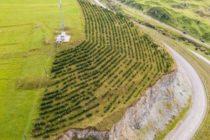 Armenia Tree Project նախագիծը տոնում է 25 ամյա կայուն զարգացումը